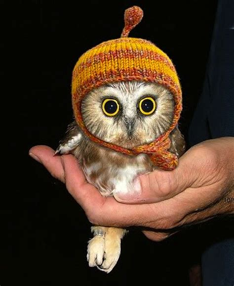 the 10 cutest baby owls on the web