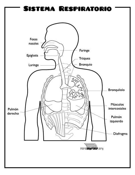 da clic para ver en grande e imprimir sistema respiratorio para imprimir