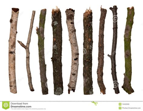 and sticj sticks and twigs stock photo image of simplistic brown