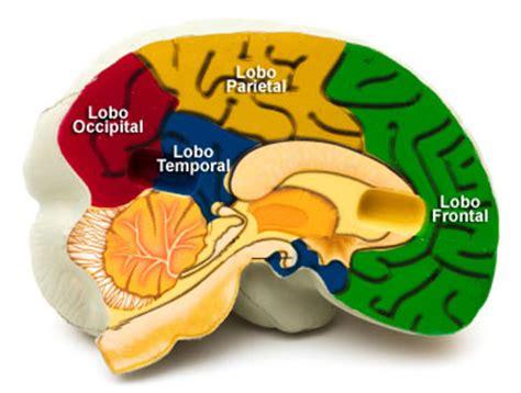 lade frontali silva neuroci 234 ncias em benef 237 cio da educa 231 227 o pesquisando sobre