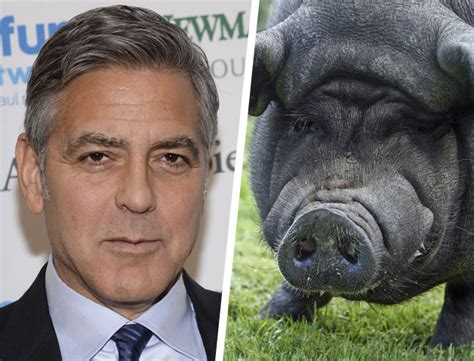 George Clooney Mourns His Dead Pig by 14 Strange Pets