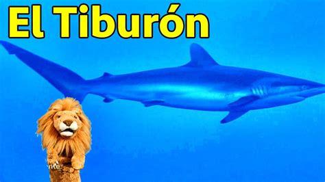 imagenes leones vs tiburones los ni 241 os conocen al tibur 243 n animales del acuario con