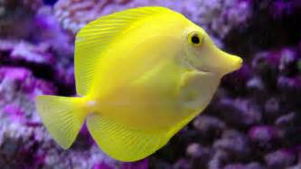 ocean fish photos wallpaper hd 1920x1080 5383