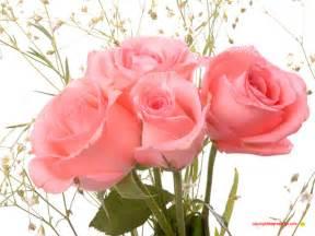 imagenes de rosas sangrientas bloggang com tui laksi เร องราวในว นว างๆ