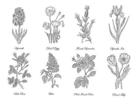 small decorative drawings botanical flowers decorative drawing drawing by irina