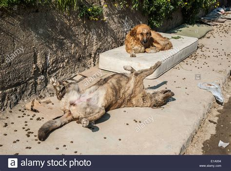 abandoned dogs abandoned dogs stock photo royalty free image 69675652