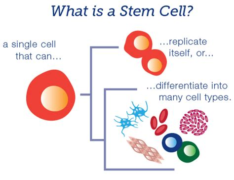 stem cells stem cell therapy houston tx damaged tissue repair