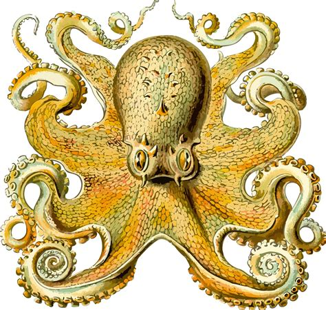 clipart octopus 2