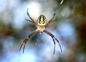 david kleinert photography yellow spider nature
