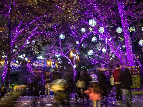 what does zoo lights fantastic when does zoo lights start f69 on stylish image