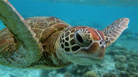 Day 5 Turtles by 9 Facts About Turtles For World Turtle Day