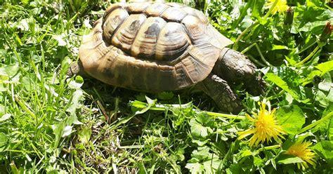 bath woman   tortoise  pet escapes