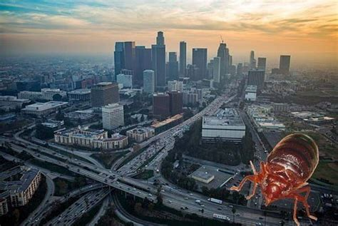bed bugs los angeles top 15 american cities besieged by bed bugs page 12 of