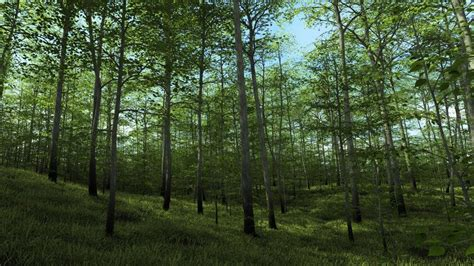 render forest harpwood county coming to daz studio now released