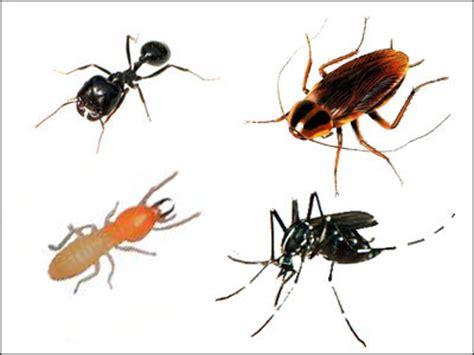Racun Semut Serangga Kecoa Bisa Untuk Rumah Walet catatanku cara jitu mengusir serangga dengan aman