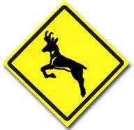 Phish Antelope Crossing Sticker mr miner s phish thoughts 187 archive 187 a desert antelope