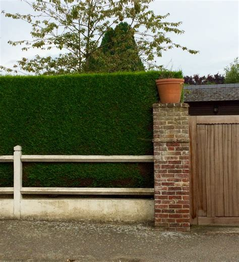 Colour Combination For Wall by Fences For Privacy 9 Great Ideas For Garden Screening