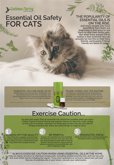 essential oils and your cat what you need to know goddess of spring