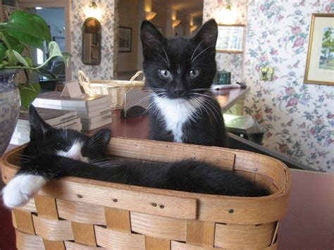 bed and breakfast new hshire visit kittens at our new hshire bed and breakfast