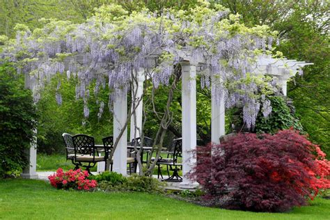 Pergola Plants Guide Shade And Enhance Your Outdoor Space Pergola Plants For Shade