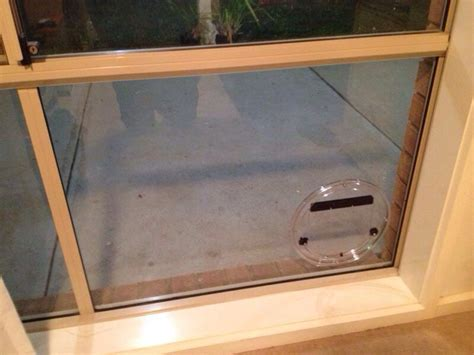 Cat Flaps Cat Doors Installed Melbourne Affinity Glazing Cat Glass Door