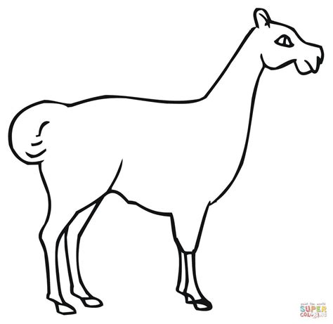Llama Coloring Pages sketch template
