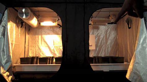mother plants vegging room grow tent grow room designs
