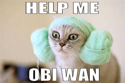 Star Wars Cat Meme - some star wars memes for phantom menace day 27 photos