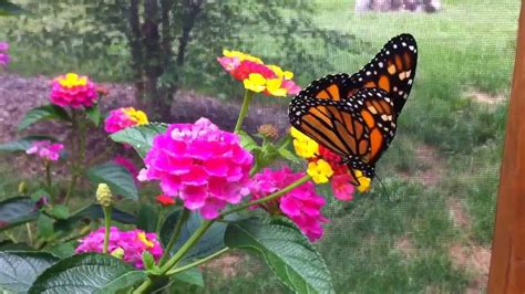 botanical gardens of the ozarks butterfly garden of botanical garden of the