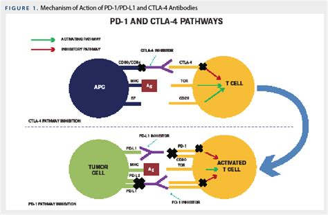immune checkpoint inhibitors in renal cell carcinoma