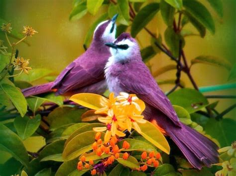 purple birds name unknown birds of a feather pinterest