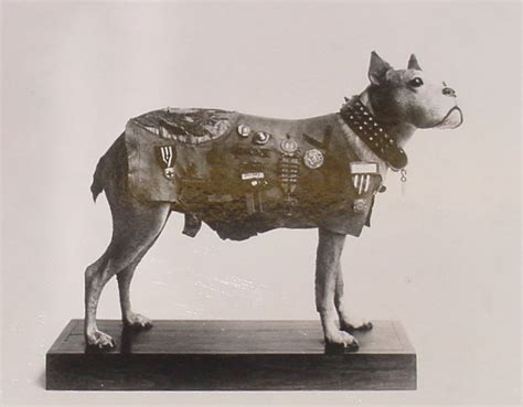 Sergeant Stubby German Amazing Tale Of A Desperate Wwii Pilot S Encounter With A German Flying Ace Thee Rant