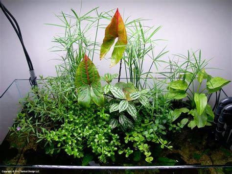 Aquascape Plants List by 17 Best Images About Aquascape Wabi Kusa On