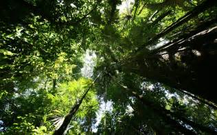 Forest Canopy Rainforest Hd Wallpaper Nature Wallpapers