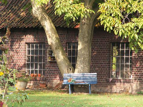 haus und grundbesitzerverein köln 203 walnussbaum am nottulner landweg