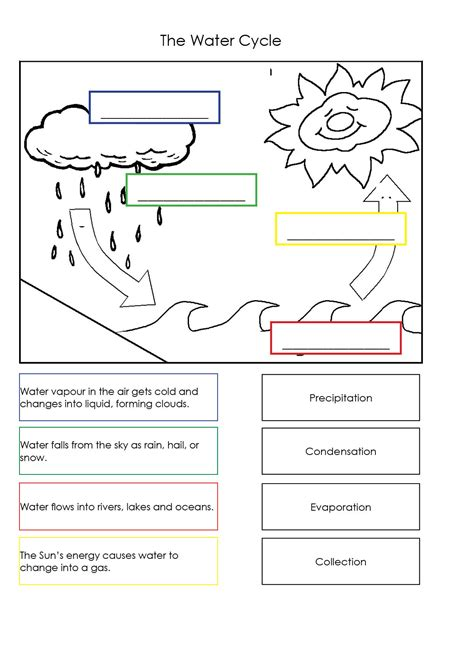Water Cycle Worksheet itsy bitsy spider sequence worksheet new calendar template site