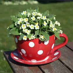 teacup planter all the best