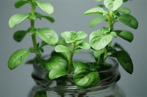 aliexpress kaemingk plante aromatique fashion designs