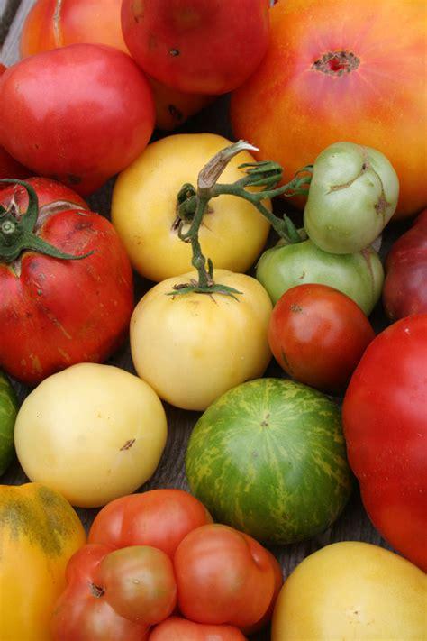 wann pflanzt bã ume um tomaten auspflanzen tomaten archive garten mix jetzt