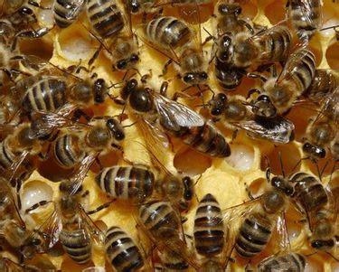 abeille assurances si鑒e social comment l abeille devient reine cerveau psycho
