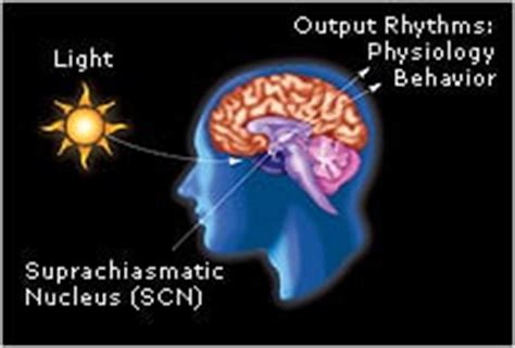 Blue Light Effect On Sleep by Why Sleeping With Window Is Bad Feng Shui