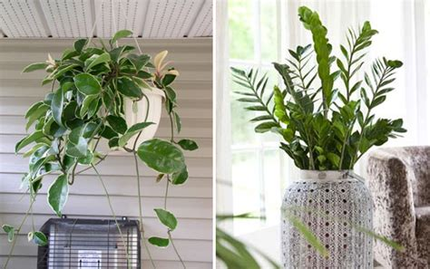 plants that do well indoors garden pictures that will inspire you garden ideas