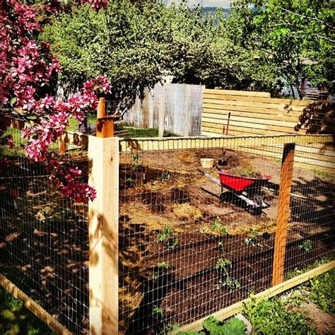 how to keep dog in yard without fence 17 best images about cottage secret garden on pinterest screen doors places and for women