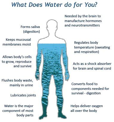 Liquid Go The Day how many days can you survive without water business