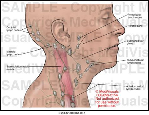 lymph nodes in neck diagram location lymph nodes in neck diagram location anatomy human