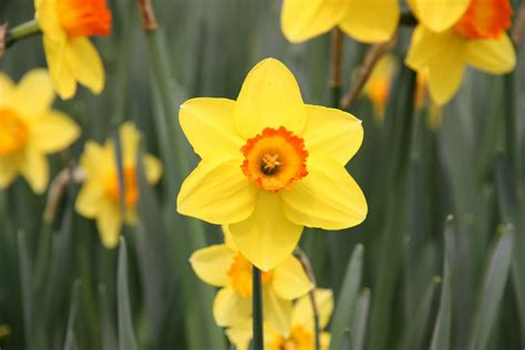 daffodil yellow treating cancer with energy healing including the bengston method and the domancic method is