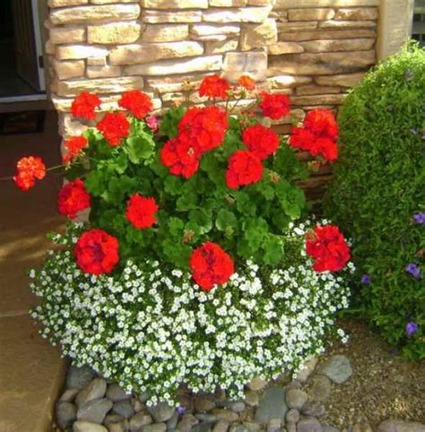 best flowers for small pots 25 best ideas about container plants on