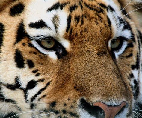 imagenes de animales en 3d imagenes de animales anime 3d taringa