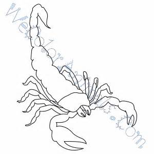 scorpion colors scorpion coloring pages