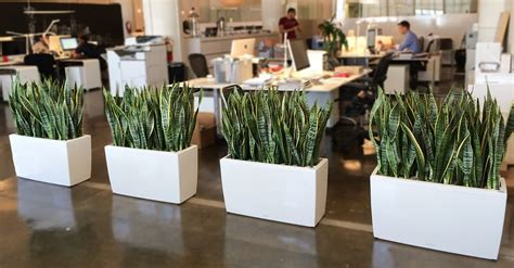 best plants for an office nyc office plant delivery service